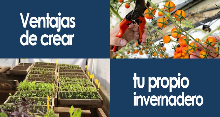 ventajas de crear tu propio invernadero