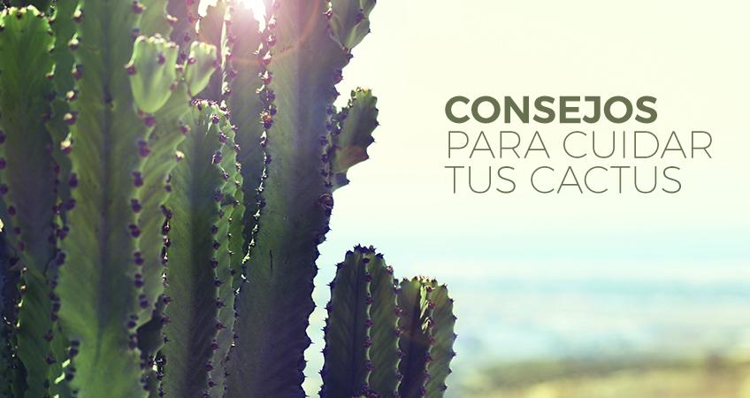 CONSEJOS PARA CUIDAR TUS CACTUS