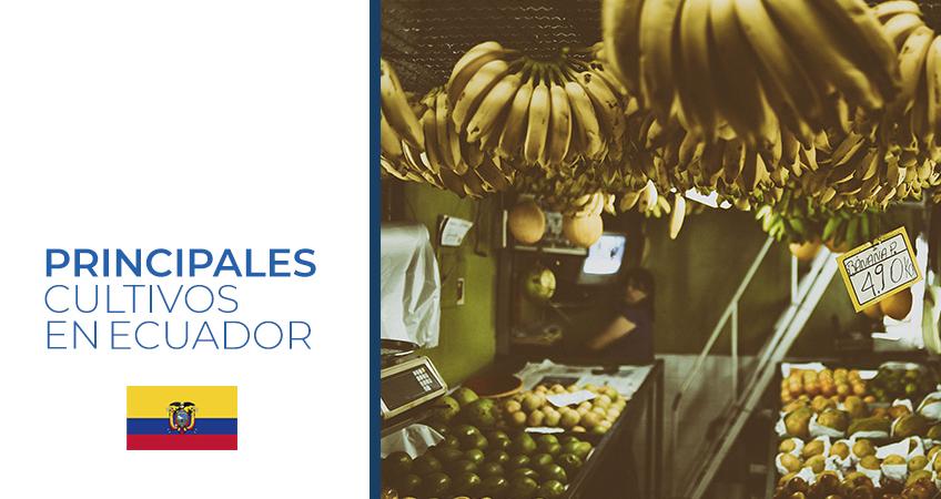 cultivos Ecuador