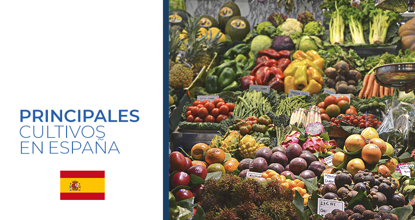 cultivos en España