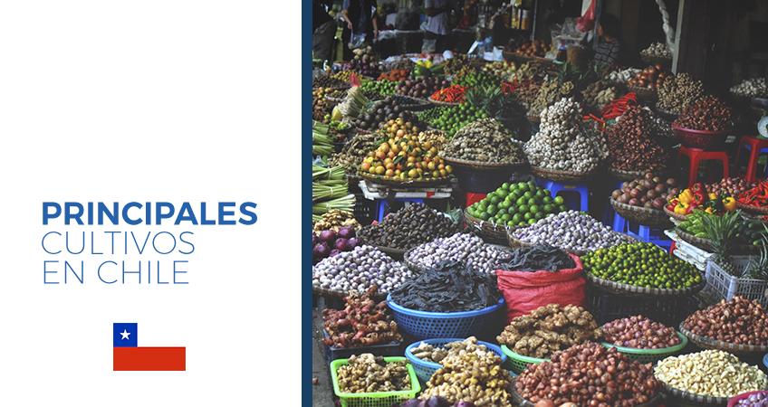 cultivos en chile
