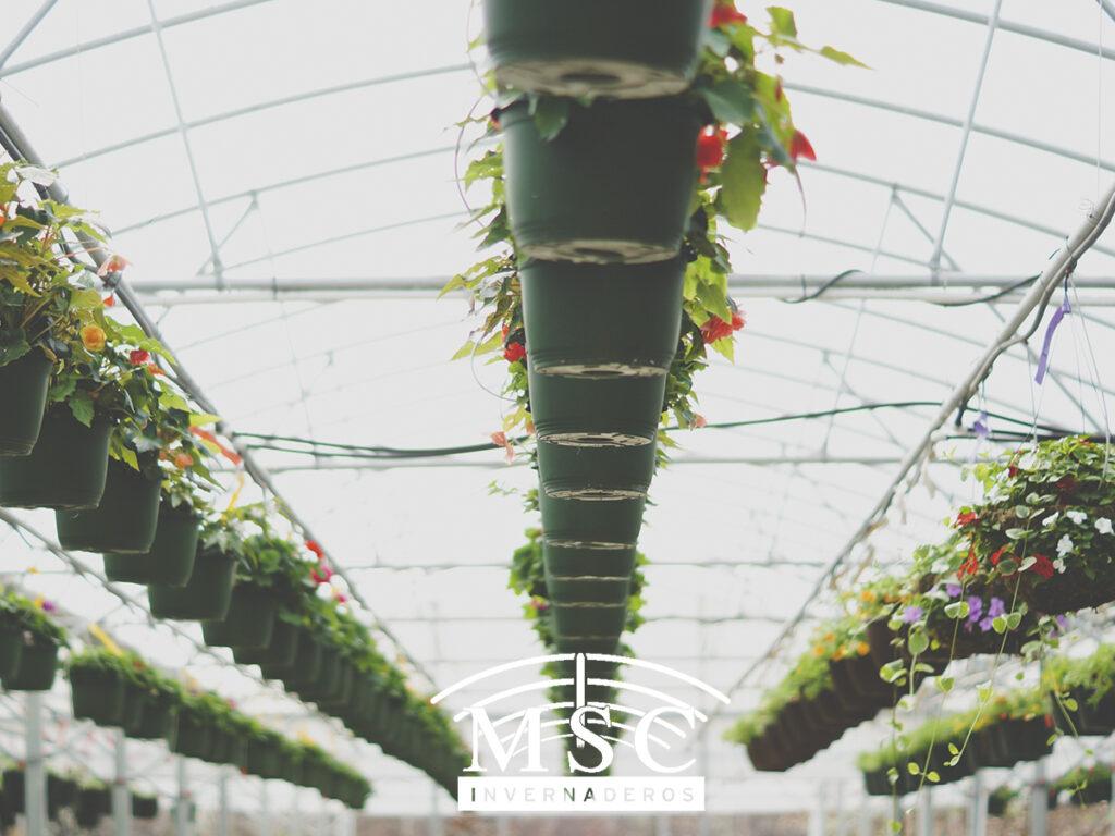 La importancia de los invernaderos